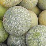 drf-melon